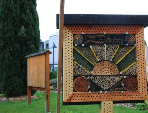 AWO Seniorenzentrum Koblenz: Eröffnung von Insekten-Hotels
