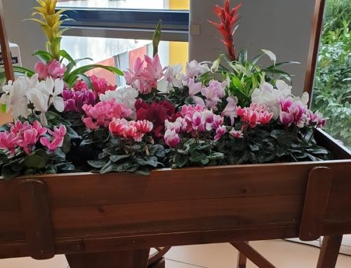 AWO Bad Kreuznach erhält Blumenspende